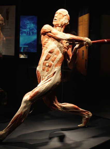 Body Worlds is Back in Charlotte!