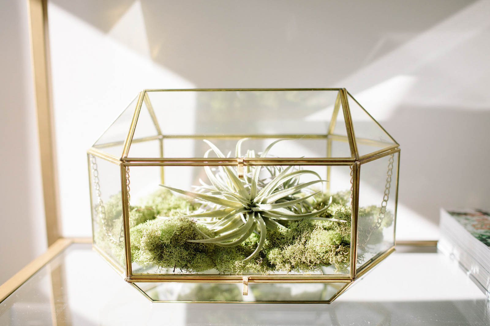 glass terrarium, air plant