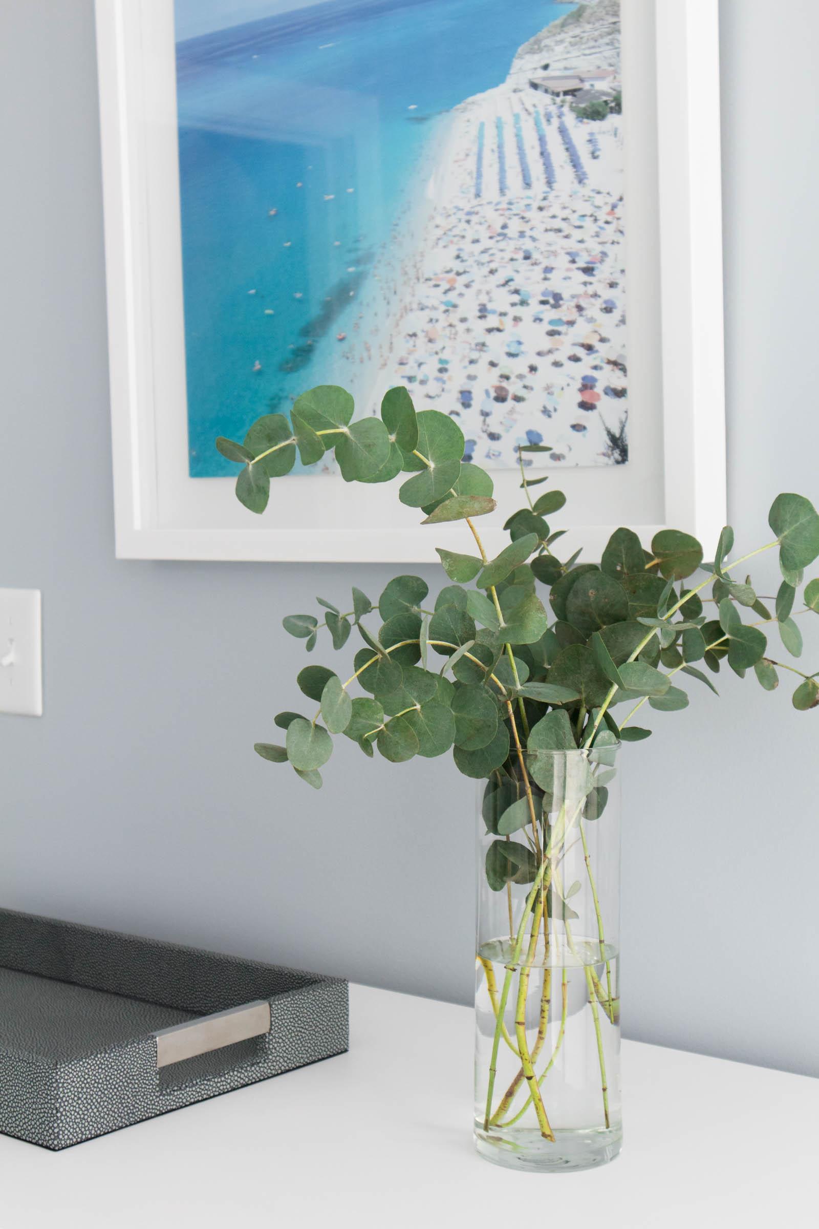 fresh eucalyptus